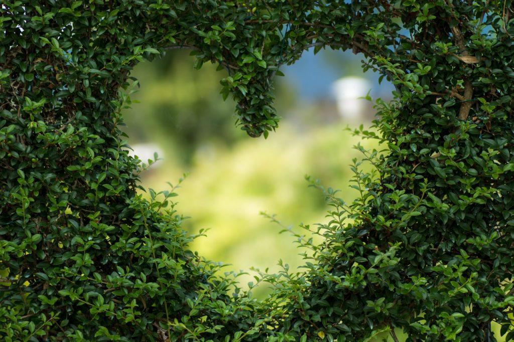 Grönt hjärta