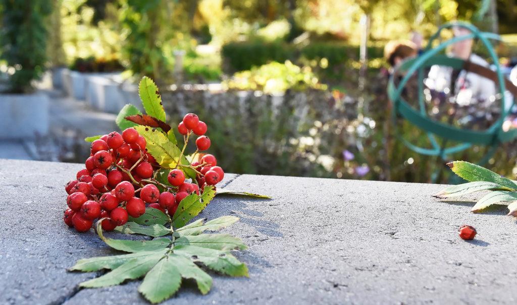 Rönnbär i pilgrimsträdgården